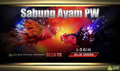 Situs Sabung Ayam PW Pisau S128 » Video Ayam Laga Indonesia